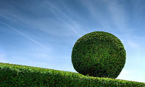 Landscape Gardener Greenock