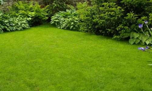 Grass Cutting Greenock
